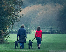 Lady and Man Taking their 2 Dogs for a Walk in the Park.